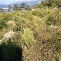 Blizikuce'de panoramik manzaralı arsa, Montenegro da satılık arsa, Montenegro da satılık imar arsası