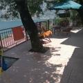 Boka Kotor Körfezi kıyısında şirin bir ev, Karadağ satılık ev, Karadağ satılık müstakil ev, Karadağ Ev Fiyatları