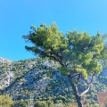 Kotor'da tadilat evi, Kotor-Bay satılık müstakil ev, Kotor-Bay satılık villa