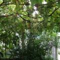 Krasici'de Acil Satılık Tripleks Ev, Lustica Peninsula satılık müstakil ev, Lustica Peninsula satılık villa