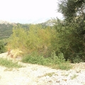 Plot in Blizikuce, building land in Region Budva, land for sale in Becici Montenegro