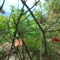 Igalo'da havuzlu ve bahçeli muhteşem daire, Herceg Novi da ev fiyatları, Herceg Novi satılık ev fiyatları, Herceg Novi ev almak