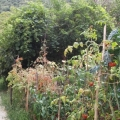 Green Family Estate 100 Meters From The Sea, Morinj, 20 km From Kotor., house near the sea Montenegro