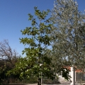 Kavac'da Tripleks Villa, Region Tivat satılık müstakil ev, Region Tivat satılık villa