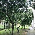 Zelenika, Herceg Novi Rivierası'nda Müstakil Ev, Karadağ satılık ev, Karadağ satılık müstakil ev, Karadağ Ev Fiyatları