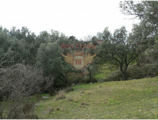 The plot is located in an olive grove on a small hill.